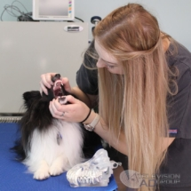 university veterinary specialist