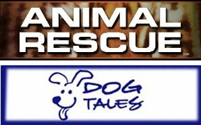 animal rescue dog tales