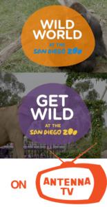 Wild World-Get Wild on Antenna TV
