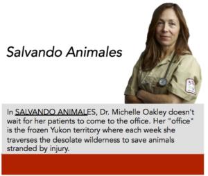 Salvando Animales